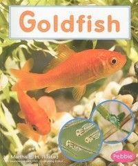 Goldfish ~ Rustad