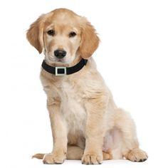 Hund mit Weenect GPS Halsband