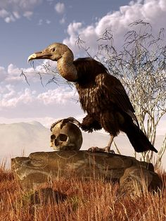 """A Huge American Black #Vulture stands proudly upon a rock resting in a grassy field.  It is late fall the and grass has turned a golden yellowish-brown.  Behind the vulture sits a leafless bush, framing the bird's black body.  Hazy hills can be seen in the distance lying under a blue sky filled with puffy white clouds.  An old weathered human# skull rests on the rock before the vulture, and he puts his claw upon it like a conquering hero.  He says aloud:  """"Alas, poor Yorick! He tasted good."""""""