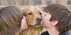 Una creativa iniciativa para que los niños lean cuentos a animales abandonados - El Valor de Servir