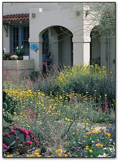 My kind of xeriscaping... A variety of wildflowers and cacti provide vibrant color in the springtime.
