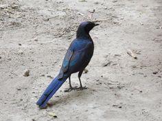 Spot all sorts of birds in the Okavango Delta, Botswana