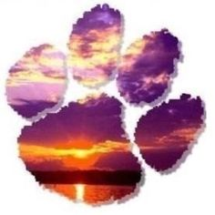 Only in Clemson are sunsets purple and orange! Tiger Girl, Tiger Love, Tiger Paw, Clemson Football, College Football Teams, Clemson Tigers, Fight Tiger, Orange And Purple, South Carolina