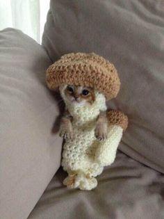 Twitter / gareth_danger: It's a kitten dressed as a ...