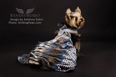 """Anthony Rubio Pet Fashion Couture Dogs New York 2 on Flickr.Follies Bergere inspired dress featuring hand rusching in iridescent chiffon and lots of special detail work including the magnificent bows with rhinestone knots. If that isn't enough the top half separates to be it's own ruffled harness. The girl lucky to wear this unique creation is sure to be """"la cloche de la balle"""".  .  Creation Designed by Award Winning Pet Couturier Anthony Rubio for Bandit Rubio Designs."""