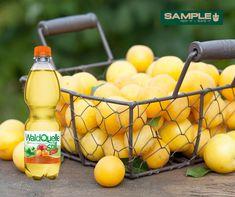 Wieder einmal ein echt tolles neues Produkt in der SAMPLE+ Box 📦😎🛒📦😎🛒 : Wasser+Äpfel+Mirabellen+Zitrone = Waldquelle = so erfrischend und geschmacklich top! Äpfel alles klar, aber was sind eigentlich Mirabellen?! Und wo wachsen die? Die Mirabelle (Prunus domestica subsp. syriaca), auch als Gelbe Zwetschke bezeichnet, ist eine Unterart der Pflaume.[1] Die Mirabelle wird von Laien oft mit der ihr in Größe und Gestalt ähnlich sehenden Kirschpflaume verwechselt. Diese hat aber eine… Dairy, Food, Cherries, Lemon, Apple, Amazing, Essen, Meals, Yemek