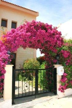 Mailbox Landscaping, Garden Landscaping, Farmhouse Landscaping, Landscaping Ideas, Backyard Ideas, Amazing Gardens, Beautiful Gardens, Milk Can Decor, Garden Makeover