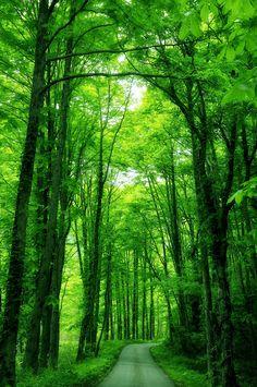 handa: 500px: - Green road by Haru Jm7kiv ...