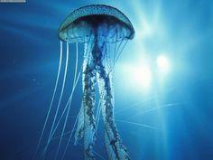 ::MEDUSA::http://www.estudiantes.info/ciencias_naturales/medusa.htm