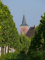 Hochzeit auf Weingut Pfalz