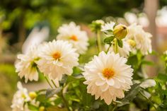 #flora #flower #garden #gardening #love #white flower