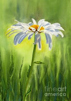 Single White Daisy Painting by Sharon Freeman - Single White Daisy Fine Art Prints and Posters for Sale