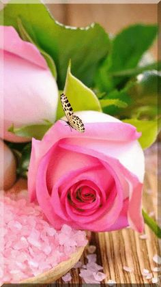 Captivating Why Rose Gardening Is So Addictive Ideas. Stupefying Why Rose Gardening Is So Addictive Ideas. Beautiful Rose Flowers, Pretty Roses, Amazing Flowers, Carpe Diem, Image Fleur Rose, Purple Roses, Pink Flowers, Little Presents, Bouquet