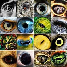 Creature eyes.