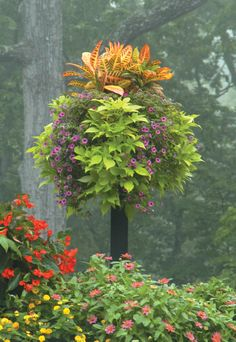 Check out these baskets on posts that give great for vertical garden impact. Designed by Pamela Crawford. Landscape Design Small, Landscape Plans, Front Porch Flowers, Tropical Landscaping, Garden Landscaping, Tropical Gardens, Garden Show, Garden Park, Big Plants