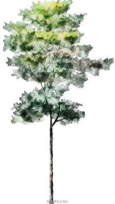 水彩风格的手绘树1