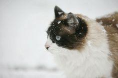 Karmy light dla kotów