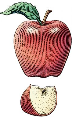 Scratchboard illustration of a whole Red Delicious apple with a stem and leaf, and with a single wedge below.