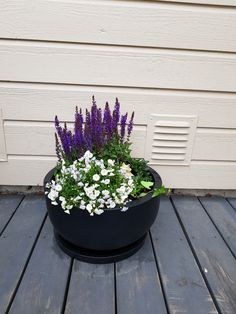 Outdoor plants Outdoor Plants, Succulents, Sun Plants, Succulent Plants, Garden Plants