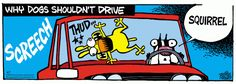 Why Dogs Shouldn't Drive. Mother Goose and Grimm By Mike Peters.