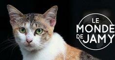 Le 20 avril prochain à 20h55, France 3 présentera son nouveau programme: «Le monde de Jamy, dans la tête de nos animaux préférés»…