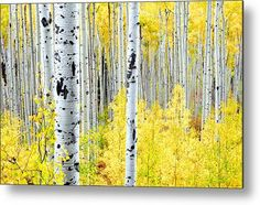 Miles Of Gold Metal Print by The Forests Edge Photography - Diane Sandoval.  All metal prints are professionally printed, packaged, and shipped within 3 - 4 business days and delivered ready-to-hang on your wall. Choose from multiple sizes and mounting options.