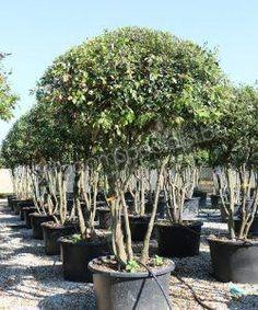 Evergreen Trees, Best Sellers, Flora, Exterior, Plants, Oscars, City, Gardens, Patio