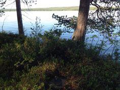 Finland, Scenery, Plants, Landscape, Landscapes, Planters, Paisajes, Plant, Planting