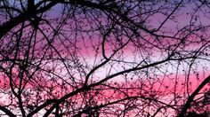 ❀Pink And Purple Sunset❀