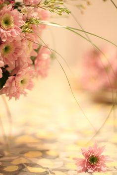 Gypsy Purple home. Pretty In Pink, Pink Flowers, Beautiful Flowers, Perfect Pink, My Flower, Flower Power, I Believe In Pink, Purple Home, Foto Art