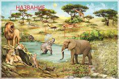 "Encyclopedia ""Animals around the world"" on Behance"