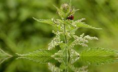 Natürliche Schädlingsbekämpfung im Biogarten
