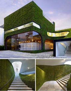 contrasting the coldness of concrete and glass with the vitality and texture of moss