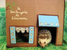 Decorate cardboard boxes for out of cage playtime. This boulangerie is so cute!