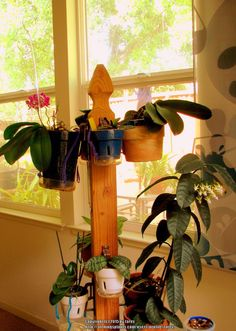 Nice orchid pole with clay pots hung by hangapot hangers. DIY with a mailbox post and 2by4 in. 16 inch lengths for legs...