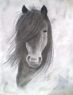 Charcoal Drawing of Horse. I love horses. If I could draw that good. I would draw every day.
