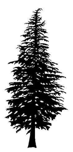 Tree silhouette for my next tattoo Pine Tattoo, Deer Tattoo, Raven Tattoo, Tattoo Ink, Arm Tattoo, Kiefer Silhouette, Pine Tree Silhouette, Types Of Christmas Trees, Scientific Drawing