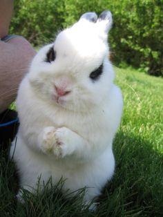 animal  photo pins | Photo de lapin maléfique | Blog Insolite
