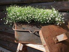 Spring Garden, Beautiful Gardens, Instagram, Plants, Plant, Planets