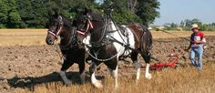 Website for horse drawn equipment. Sickle mowers; Cultivators; Horse Drawn Plows; Horse Drawn Farm Carts...etc HV