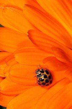 Orange Yellow Black / Flower Macro with Ladybug Orange Aesthetic, Rainbow Aesthetic, Aesthetic Colors, Aesthetic Pictures, Jaune Orange, Orange Yellow, Orange Color, Light Orange, Orange Flowers