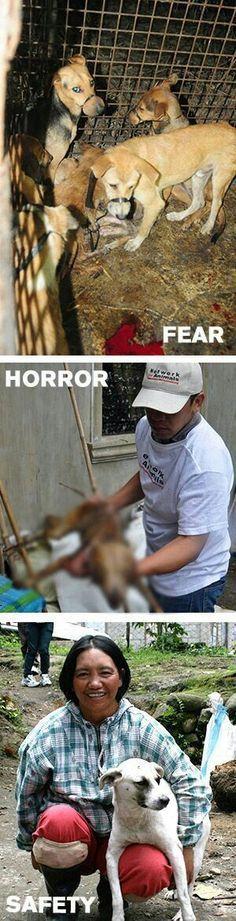 Victims of #AsianDogMeatTrade.