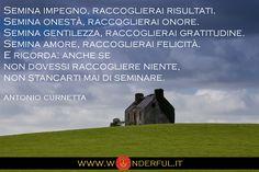 Seminare - Curnetta