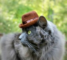 Cat in a hat   __ What is FREECABA? (See My Profile <@jurale13> for an Answer).