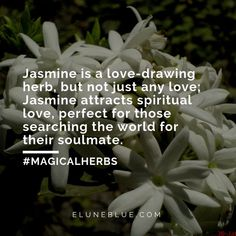 Jasmine is a love-drawing herb, but not just any love; Jasmine attracts spiritual love, perfect for those searching the world for their soulmate. -- Jasmine Magical Properties and Uses Magic Herbs, Herbal Magic, Spiritual Love, Spiritual Healer, Jasmine Flower Tattoos, Jasmine Plant, Witch Herbs, Flower Meanings, Flower Quotes
