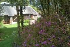 Peace and tranquillity away from the crowds, yet still close to Plett & Knysna, then Coral Tree Cottages is a must stay. We are situated just off the N2 only 12km from Plettenberg Bay in a lovely garden and forest setting. Garden Route, South Africa.  Please contact us on +27 44 532 7822 or Email : info@coraltreecottages.co.za for availability and rates.