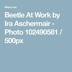 Beetle At Work by Ira Aschermair - Photo 102490581 / 500px