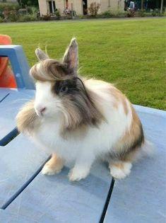 このウサギ イケメンすぎワロタwwwwwwww