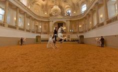 Emozionante ! # Vienna # Scuola equitazione spagnola # cavalli.
