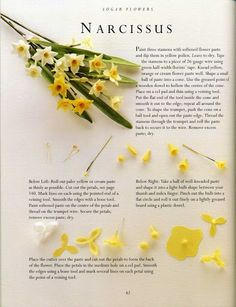 Narcissus https://picasaweb.google.com/103894105265236482786/SugarFlowers?noredirect=1